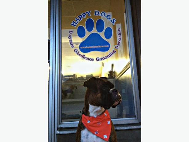 Tailored Dog Training Guelph