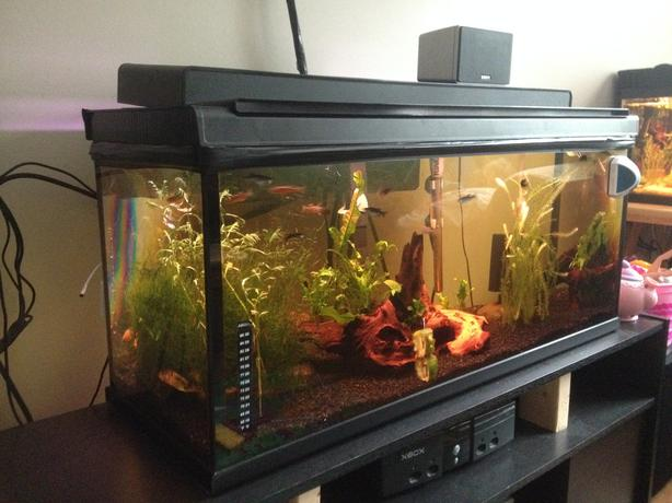 Reduced established 30g freshwater tank complete with for Amazon fish tanks for sale