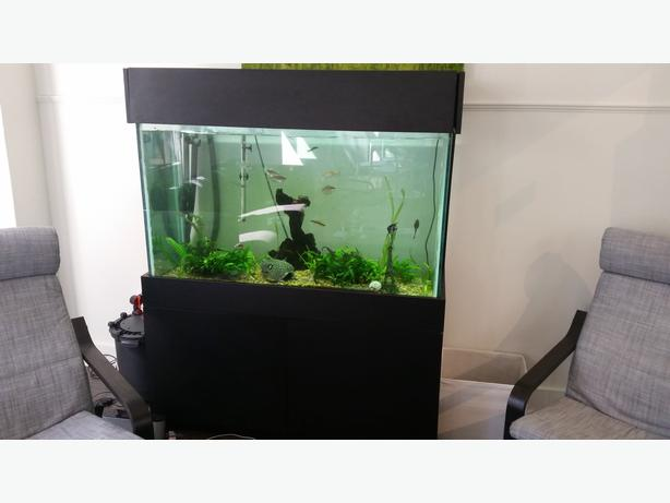 100 gallon fish tank with nice stand victoria city for 100 gallon fish tank with stand