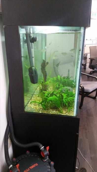 100 gallon fish tank with nice stand victoria city victoria for 100 gallon fish tank with stand