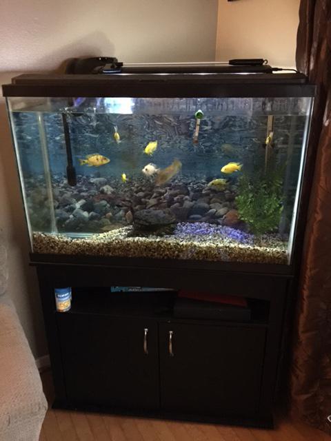 40 gallon fish tank summerside pei for Fish tank gallon calculator