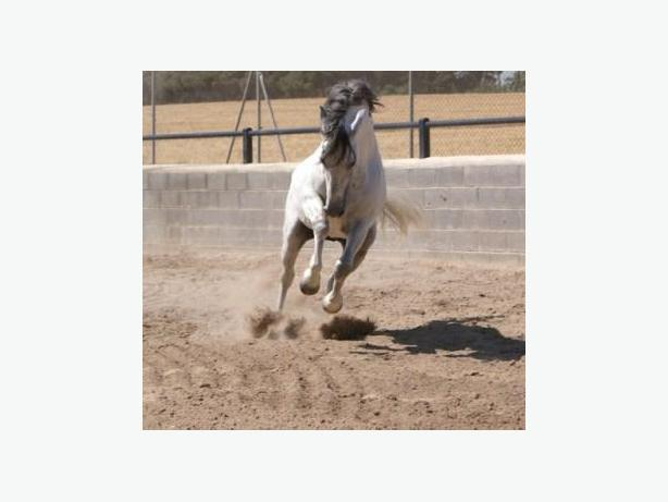 Horse Arena Footing!