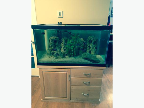 100 gallon fish tank with stand kanata ottawa for 100 gallon fish tanks