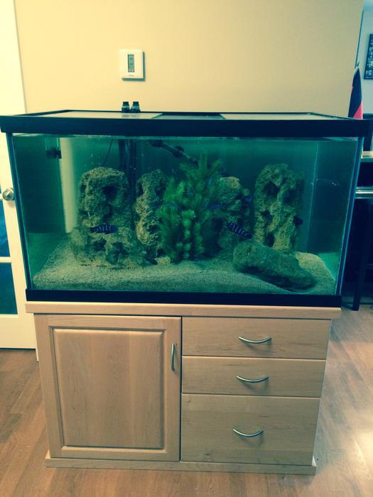 100 gallon fish tank with stand kanata gatineau for 100 gallon fish tank stand