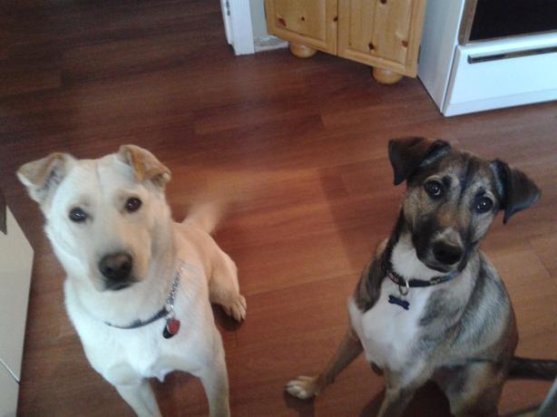 Dog Walker Thunder Bay