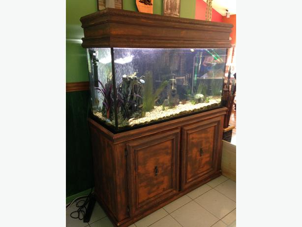 90 gallon fish tank with custom built stand sooke victoria for 90 gallon fish tank stand
