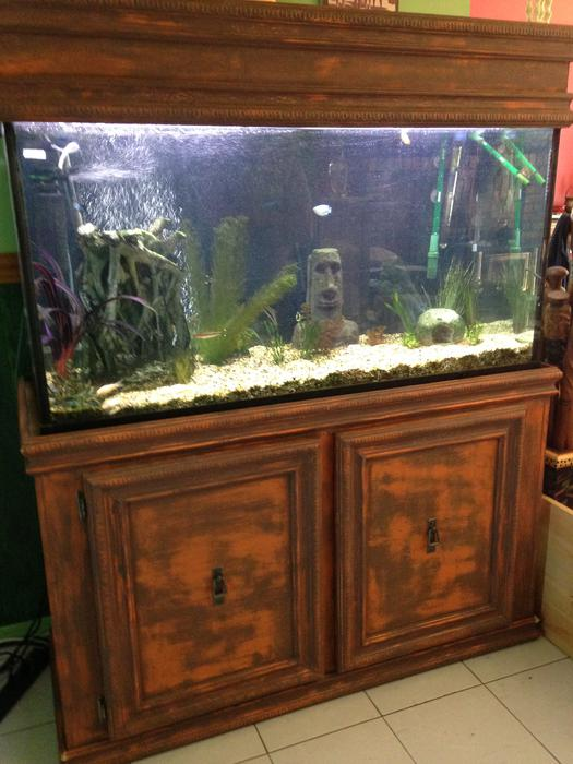 90 gallon fish tank with custom built stand sooke victoria for Custom made fish tanks