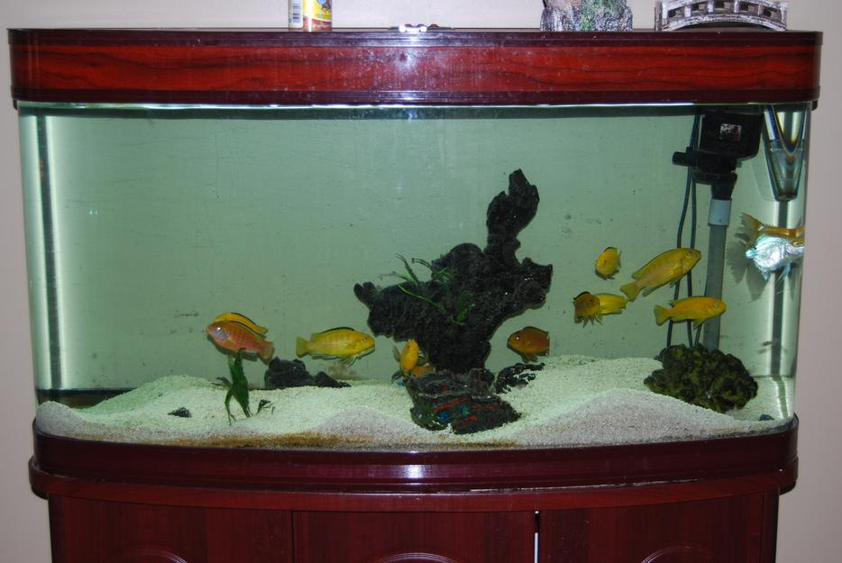 80 gallon aquarium all accessories fish for sale for Used fish tanks for sale