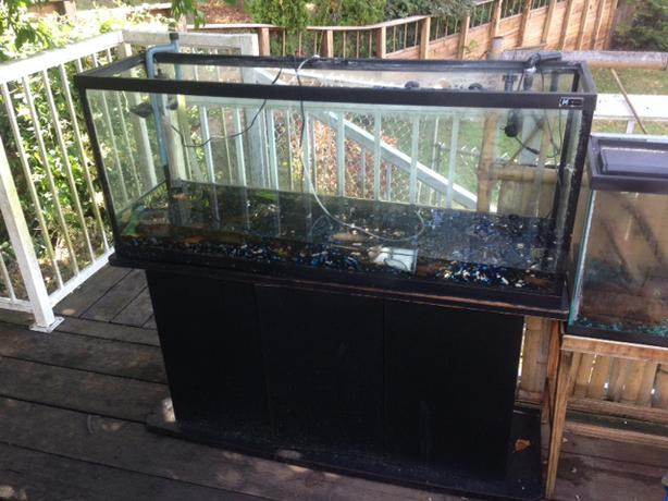 70 gallon tank with rena filstar xp filter stand and more for 70 gallon fish tank