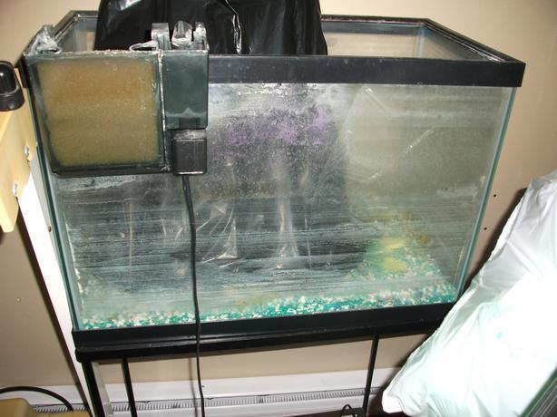 20 gallon aquarium east regina regina for 20 gallon fish tank hood
