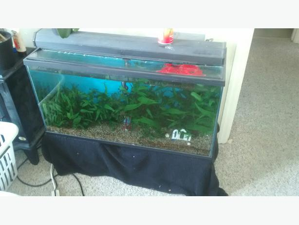 35 gallon fish tank plus accessories victoria city victoria for 10 gallon fish tank heater