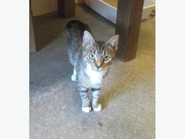 Spca Maple Ridge Cats For Adoption