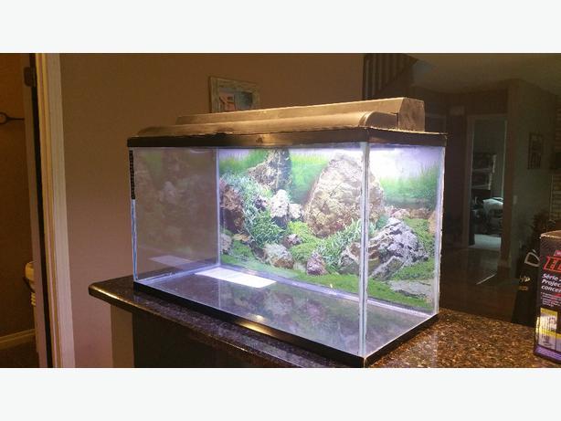 Fish tanks for sale regina 40 or obo tank top for tank for Used fish tanks for sale