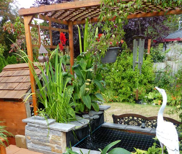 Garden and aquatic pond hydroponic plants saanich victoria for Fish pond hydroponics