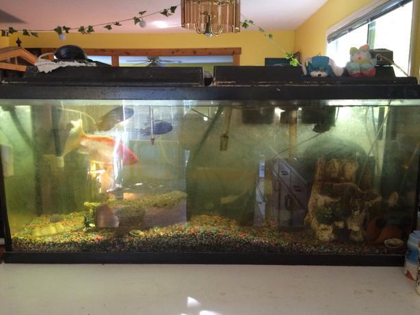 55 gallon aquarium and all accessories outside victoria for 55 gallon fish tank lid