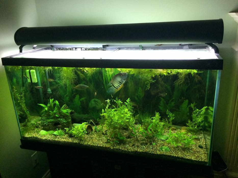 Fully planted 90 gallon tank accessories fish uv filter for 90 gallon fish tank for sale