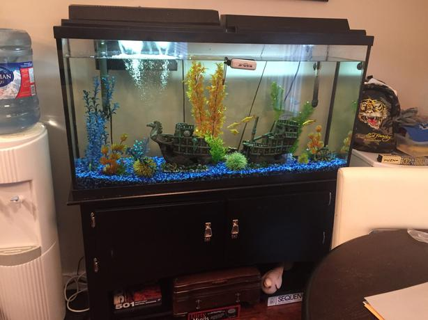 60 gallon fish tank with stand west shore langford for 60 gallon fish tank stand