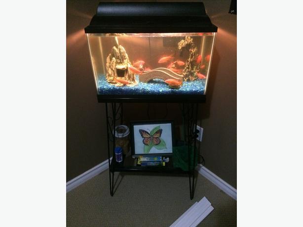10 gallon fish tank west regina regina for 10 gallon fish tank stand