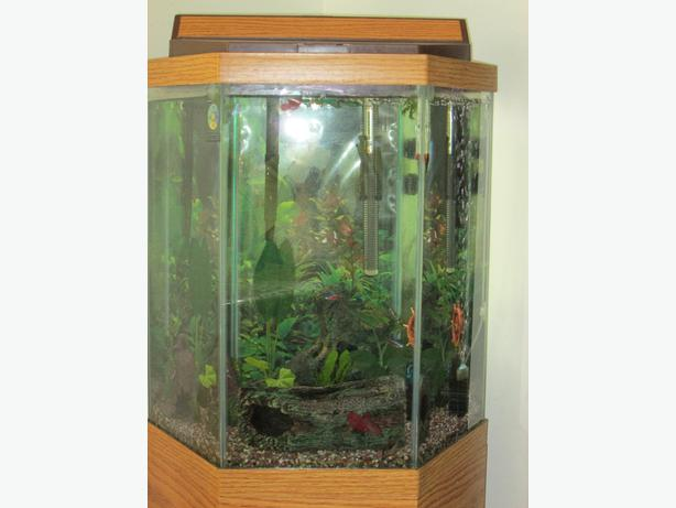 20 gallon hexagon aquarium with stand east regina regina for Hexagon fish tank with stand