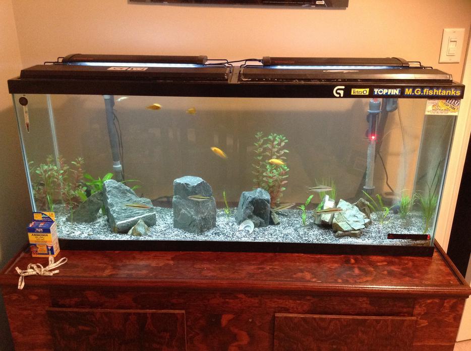 55 gallon fish tank north nanaimo nanaimo mobile for Used fish tank