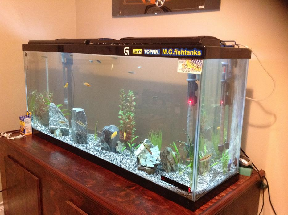 55 gallon fish tank north nanaimo nanaimo mobile