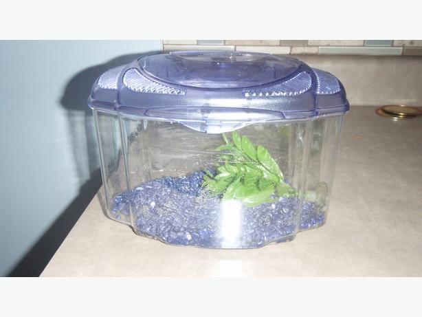 Betta Fish Tank Saanich Victoria
