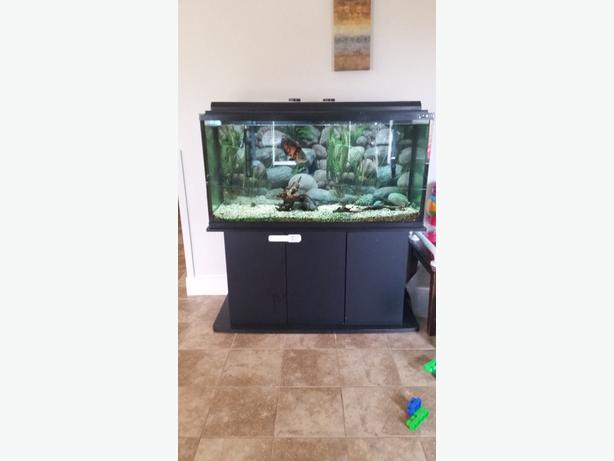 90 gallon fish tank full equiped with stand esquimalt for 90 gallon fish tank stand