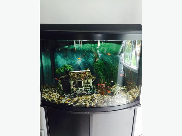 30 Gallon Bow Front Tank North Nanaimo Nanaimo