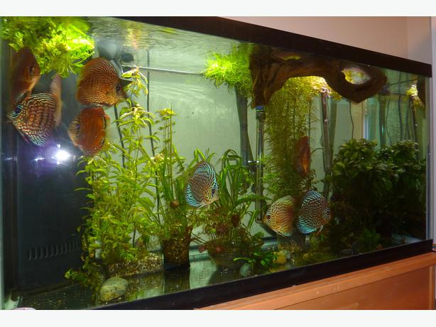 90 gal all glass aquarium with stand saanich victoria for 90 gallon fish tank stand
