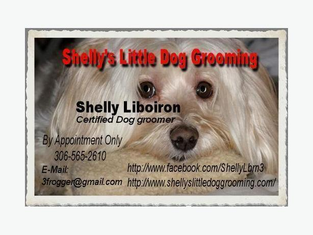 Small Dog Groomer In Gatineau