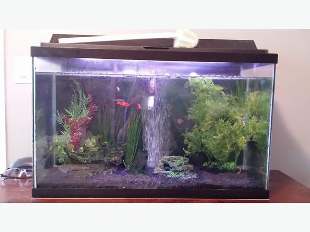 30 Gallon Fish Tank Lot Outside Nanaimo Nanaimo