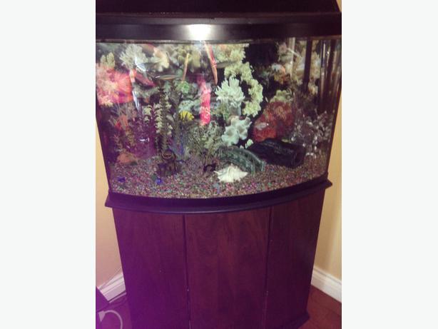 35 gallon fish tank orleans gatineau for 35 gallon fish tank