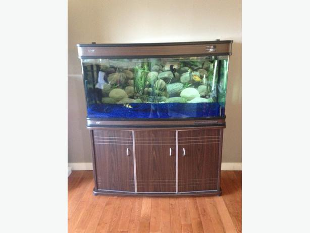 100 gallon bowfront tank stand north saanich sidney for 100 gallon fish tank with stand