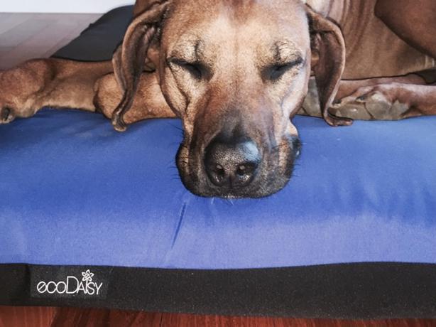 Eco-orthopedic Dog Mattress for Extra Large Breeds