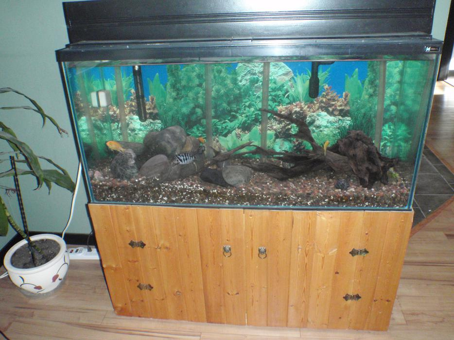 75 gallon aquarium edmonton 75 gallon corner fish tank for Corner fish tank for sale