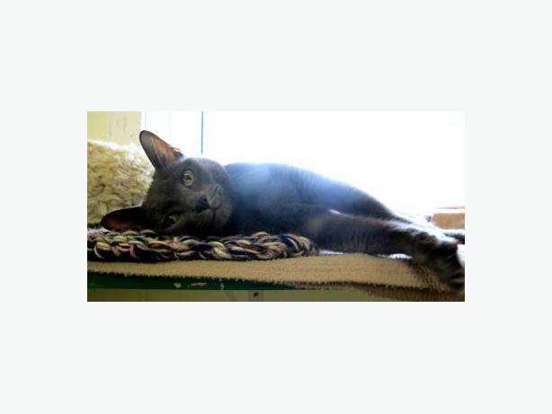 Getting My Cat Neutered In Halifax