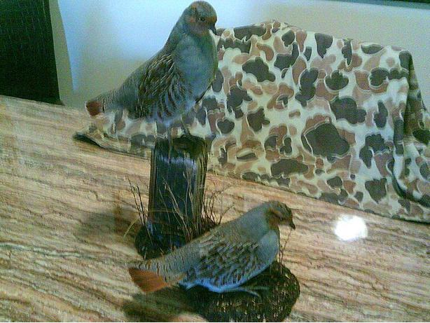 BIRD TAXIDERMY SERVICE