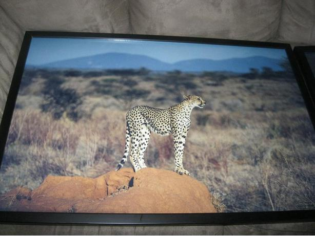 2 CHEETAH pictures ($25 each OR get BOTH for ONLY $40)