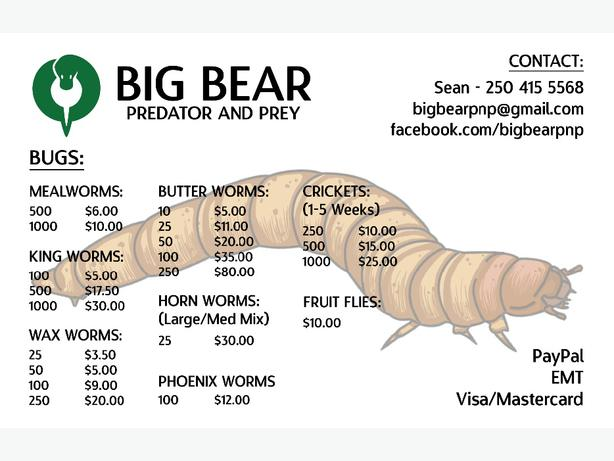Feeder Insects