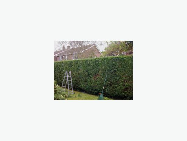Tree Pruning & Hedge Trimming