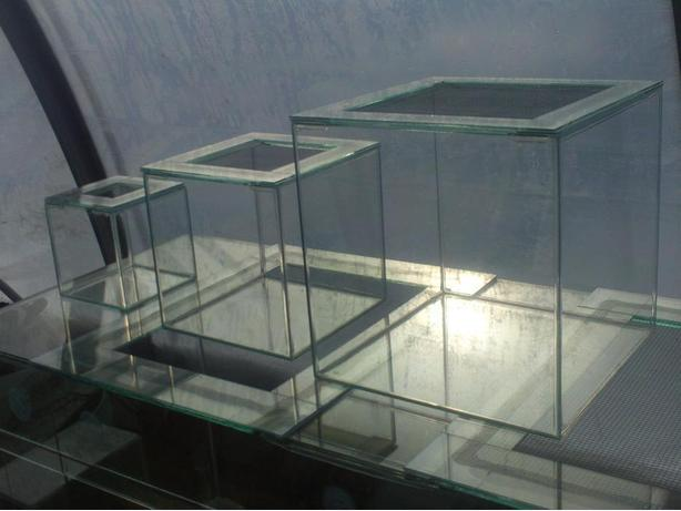 Small Glass Tanks with Screen Lids