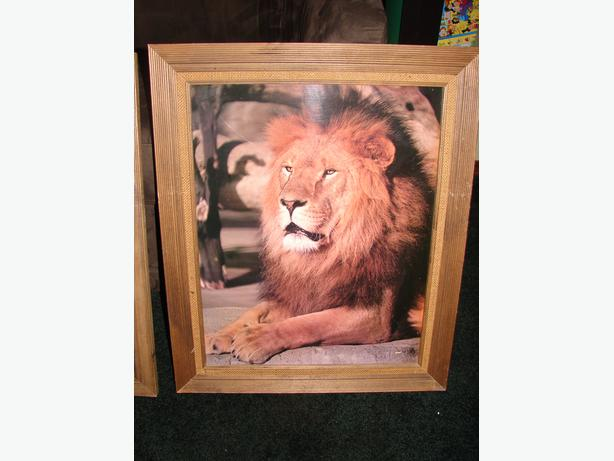 Majestic Lion in Wood frame!!!!