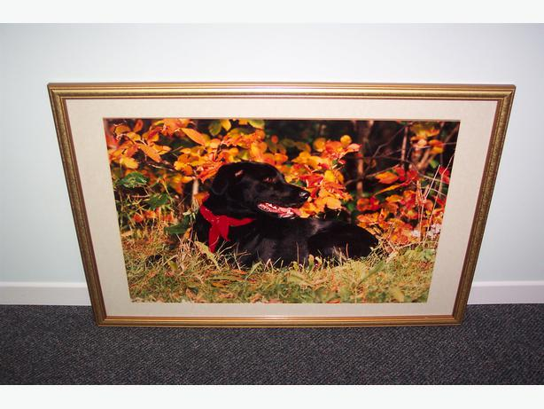 Dog Picture Frame with Glass Top