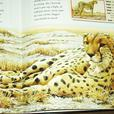 SIGNED EDITION ROBERT BATEMAN BOOK ''SAFARI''