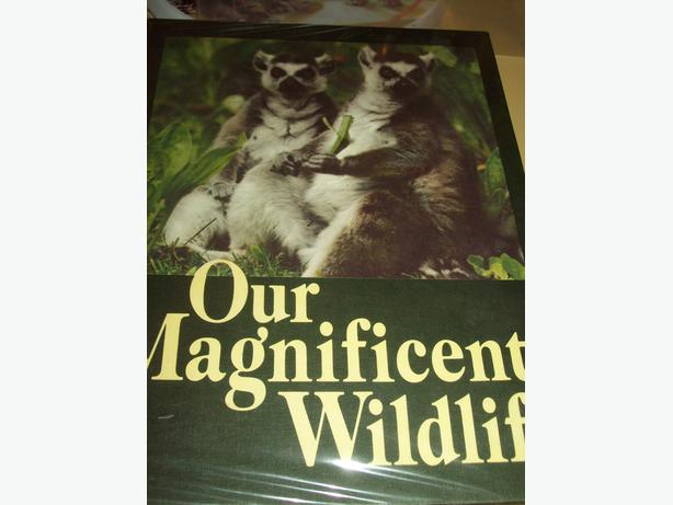 OUR MAGNIFICENT WILDLIFE BOOK