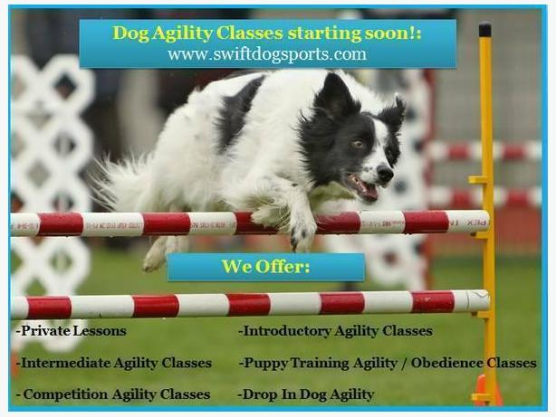 Dog Agility Classes: Intro, Advanced, & Puppy Training