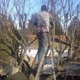 Hedge Trimming and Tree Pruning. Free Estimates