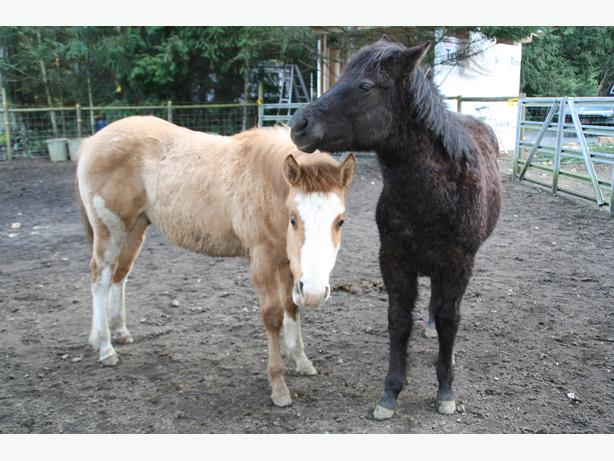 FREE: Fresh Horse Manure