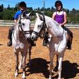 HORSEBACK RIDING & DRIVING LESSONS