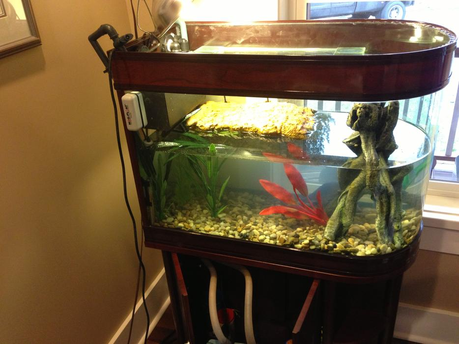 55 gallon aquarium fish tank and stand rounded end for 55 gallon fish tank and stand